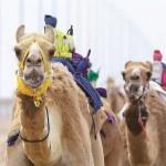 SHejh-Hamdan-prinyal-uchastie-v-festivale-naslediya-na-Al-Marmume-v-Dubae
